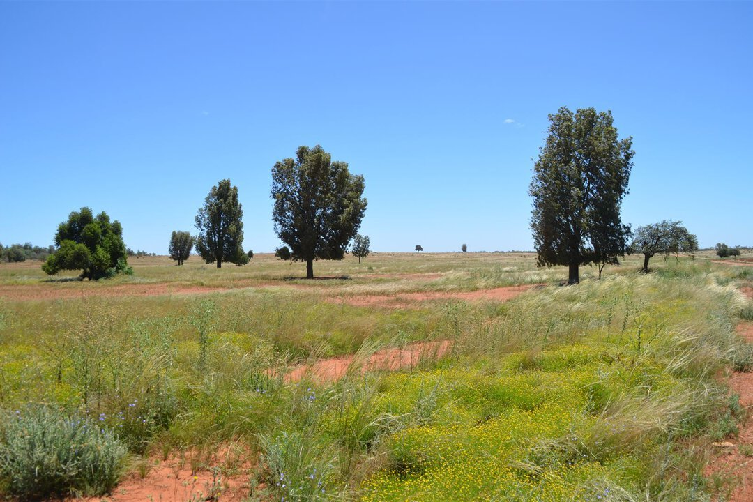 Image of property at * Windera Station, Cobar NSW 2835